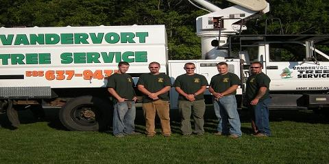 3 Important Tree Care Tips From Rochester's Best Tree Removal Service, Brockport, New York