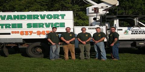 4 Important Benefits of Stump Removal Services From VanDervort Tree Service, Brockport, New York