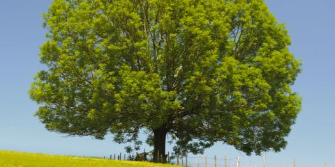 What You Need to Know About Ash Tree Removal, Henrietta, New York