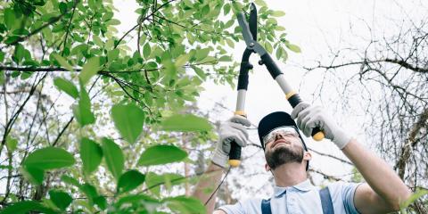 3 Benefits of Tree Trimming, Gates, New York