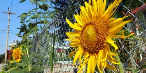 4 Ways to Use Chain-Link Fences, Hamptonburgh, New York