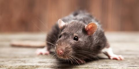 3 Signs You Need a Rodent Control Service, Versailles, Kentucky