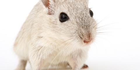 Rodent Control Tips From SK Pest Elimination, North Haven, Connecticut