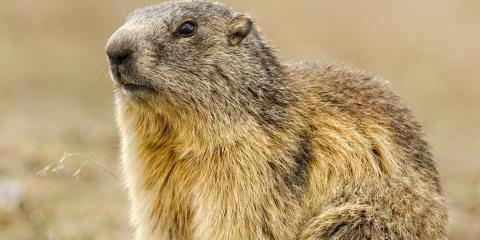 3 Types of Damage Caused By Groundhogs, Northeast Cobb, Georgia