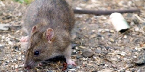 3 Benefits of Rodent Control Services From Madison's Top Professionals, Fitchburg, Wisconsin