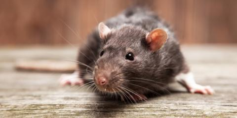 5 Warning Signs That You Need Rodent Control , Hamilton, Alabama