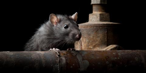 It's Rodent Awareness Week!, Oxnard, California