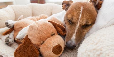 4 Common Winter Pet Health Problems, Columbia, Missouri