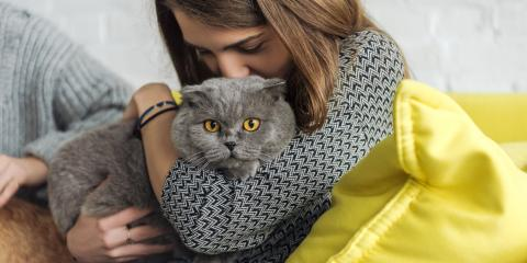 What Pet Owners Should Know About Feline Leukemia, Columbia, Missouri