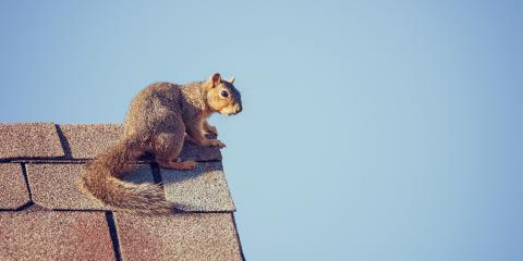 How to Observe Squirrel Awareness Month this October, Carrollton, Texas