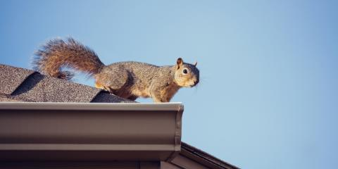 How Squirrels Impact the Health of Your Roof, Anchorage, Alaska