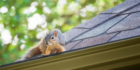3 Tips to Protect Your Roof From Pests, Fairfield, Ohio