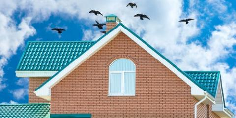 3 Ways to Prevent Animals From Damaging Your Roof, Webster, New York