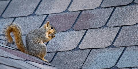 3 Animals That Are a Threat to Your Roof, Cincinnati, Ohio