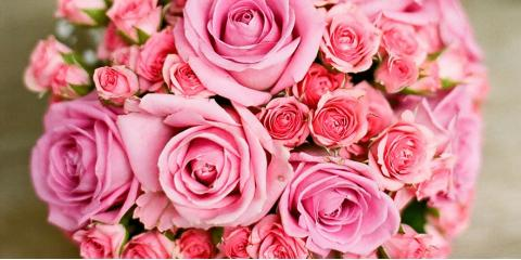 New Haven County's Best Roses, Orchids, Birthday Flowers, & More!, Hamden, Connecticut
