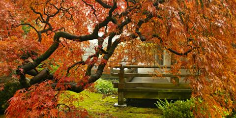 4 Top Ornamental Trees for Your Ohio Yard, Sagamore Hills, Ohio