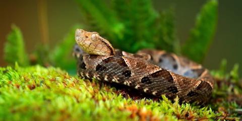 3 Ways to Tell a Snake Is Venomous, Northeast Cobb, Georgia