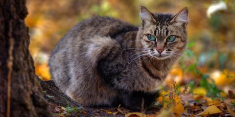 3 Ways to Keep Feral Cats Away, Northeast Cobb, Georgia