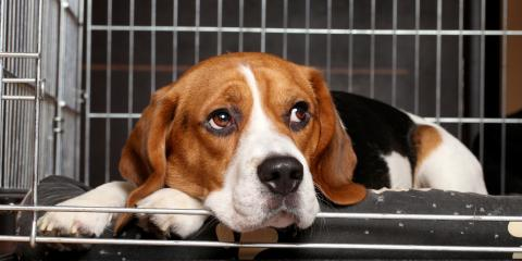 A Guide to Separation Anxiety in Dogs, Royse City, Texas
