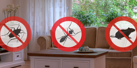 ​Acorn Exterminating's Bottom Line on Bed Bug Extermination, North Stonington, Connecticut