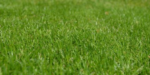 Lawn Care Experts Explain How Aeration Keeps Your Lawn Healthy, St. Charles, Missouri