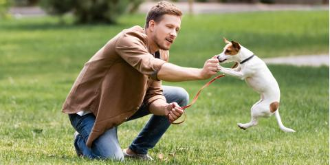 3 Tips to Help Your Dog Exercise, Russellville, Arkansas