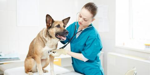 4 Signs of Heartworm Disease in Dogs, Russellville, Arkansas