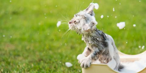 Why Do Cats Dislike Water? , Russellville, Arkansas