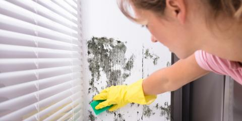 The Dangers of DIY Mold Removal, Russellville, Arkansas