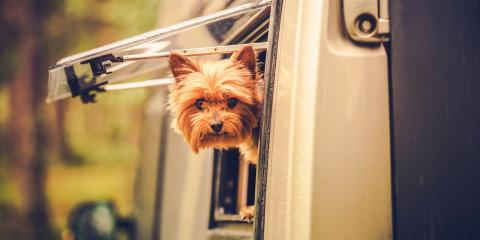3 Tips for RVing With Your Pet, Pinellas Park, Florida
