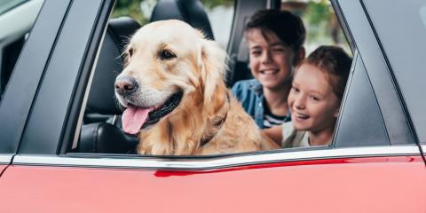 Tips for Boarding Your Pet During the Holidays, Elk Grove, California