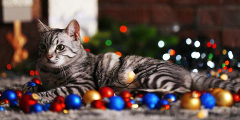 5 Holiday Hazards Pet Owners Should Know, Elk Grove, California