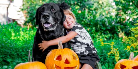 How to Keep Your Dog Extra Safe This Halloween, Elk Grove, California
