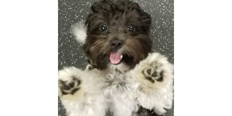 Toy Room Open - Bring your small pups today!, Highland Village, Texas