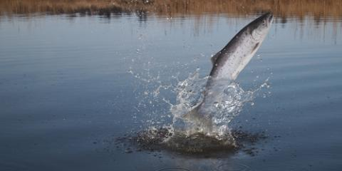 3 Ways to Make Your Alaskan Salmon Fishing Trip a Success, Juneau, Alaska
