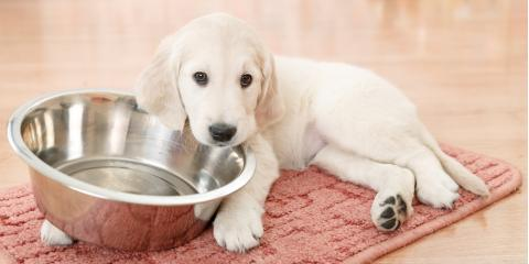 Animal Care Experts Reveal 5 Common Food Allergies in Dogs, San Marcos, Texas