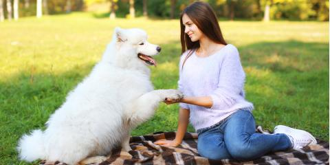 5 Kinds of Hypoallergenic Dogs, San Marcos, Texas