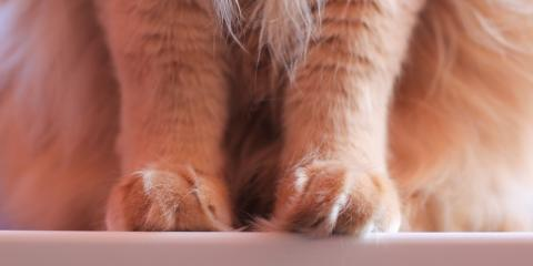 Safe Cat Declawing at Your Local Animal Clinic, San Marcos, Texas