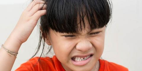 Eliminate Nits With Ladibugs Lice Treatment Products, San Antonio, Texas