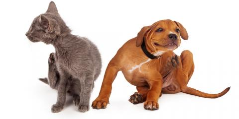 5 Pet Care Tips for Controlling & Preventing Fleas, San Marcos, Texas