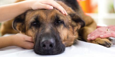 Emergency Pet Care: 5 Reasons It's Necessary, Sanford, North Carolina
