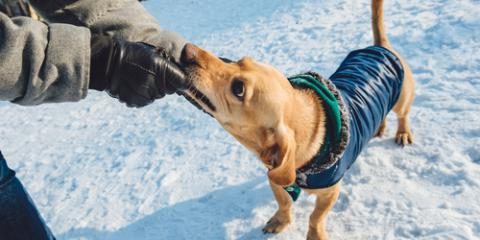 4 Top Winter Pet Grooming Tips, Sanford, North Carolina