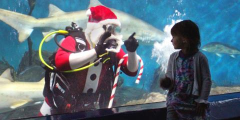 Santa Energy Sponsors The Maritime Aquarium's Santa Dive with Sharks! , Bridgeport, Connecticut