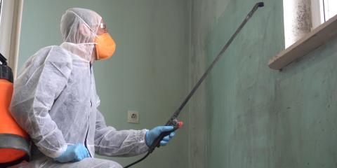 What's the Difference Between Mold Remediation & Removal?, Richmond Hill, Georgia