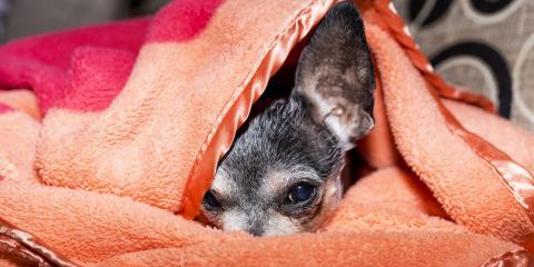 3 Tips for Anxious Pets on New Year's Eve, Wahiawa, Hawaii