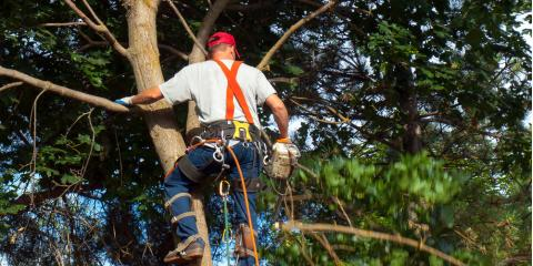 3 Signs It's Time for Tree Service, Seymour, Connecticut