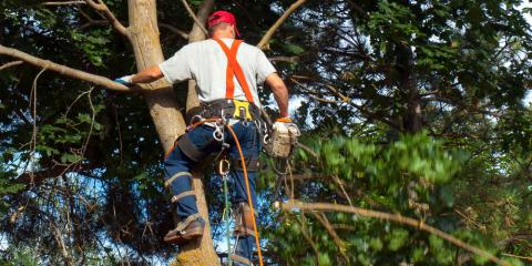Transform Your Home's Curb Appeal With a Professional Tree Service, Seymour, Connecticut