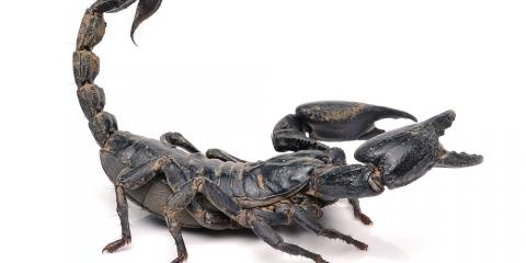 Pest Control for Scorpions in Your Home, Las Vegas, Nevada