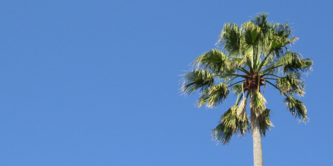 Spring Is Coming: It's Time for Tree Trimming Services on Maui, Kahului, Hawaii