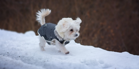 Winter Pet Care Tips From Invisible Fence of Newtown, Newtown, Connecticut